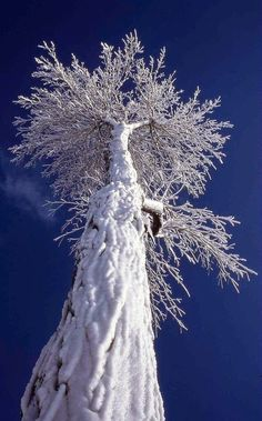 Oh beautiful! - Tree covered with snow..