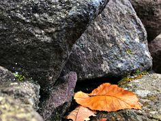 Autumn leaf on the rock with moss  #shutterstock #yellow #valley #vacation #tree #travel #stone #shape #season #rock #red #plant #park #pattern #outdoor #orange #nature #moss #leaf #japan #hokkaido #hellvalley #valley #ground #foliage #fall #beauty #beautiful #background #autumn