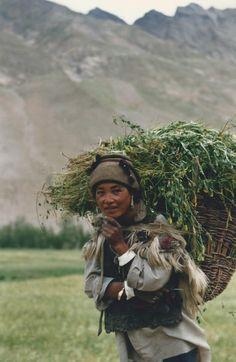 smiling Kaschmiri 1998 Bradley Mountain, Determination, Backpacks, Illustrations, Bags, Handbags, Illustration, Backpack, Backpacker
