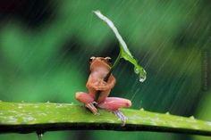 I'm singing in the rain!