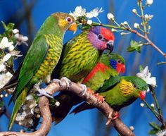 colorful twin birds