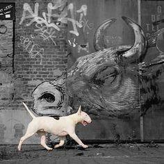 Bull & Terrier #furbex #urbexdog #urbexbullterrier #bullterrierlove…