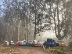 """Vintage Surfari Wagons USA on Instagram: """"Day 3 of our Vin de Vine Camp Tour. Awoke under a canopy of giant Eucalyptus trees. #vindevine #camptour #grouptours #groupcamp…"""" Eucalyptus Tree, Pismo Beach, Central Coast, Group Tours, Canopy, Vines, Camping, Photo And Video, Outdoor"""