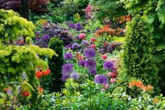 My Favorite Plant Combinations 53