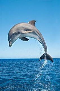 BLOG OBRAZKI: DELFINY Cute Baby Animals, Animals And Pets, Funny Animals, Beautiful Creatures, Animals Beautiful, Pretty Animals, Flipper, Water Animals, Animals Sea