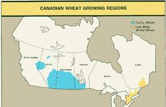 Frumento: crollano le scorte in Canada, si va ai minimi storici - Materie Prime - Commoditiestrading
