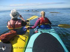 Kayaking with Sea Quest - San Juan Island, WA