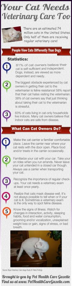 Cats Need Veterinary Care Too: http://www.pet-health-care-gazette.com/2013/08/22/today-is-take-your-cat-to-the-veterinarian-day/