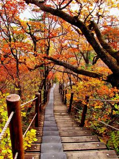 Autumn in South Korea .