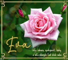 December, Rose, Flowers, Plants, Pink, Plant, Roses, Royal Icing Flowers, Flower