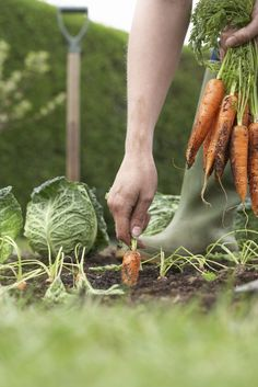 Growing your own vegetables is a great way to stay healthy. Here's a look at 10 excellent garden options: