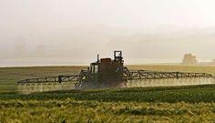 Cuando la agricultura se convierte en una maraña de quimicos, producos irradiados, sin gusto  y sintéticos