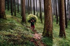 """Photo by @stevemccurryofficial // This farmer is carrying grasses for his animals in Darjeeling West Bengal India. Darjeeling a former hill station produces black tea grown on plantations which is prized by tea aficionados around the world. It is also known for the """"Toy Train""""  a narrow gauge railway built in the late nineteenth century. by natgeo"""