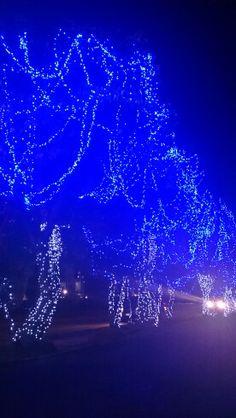 Navidad en azul.DF,  México