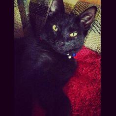 My boy #black #cat # kitten #kitty #babyboy #blackcat #blackkitty #blackkitten #yelloweyes