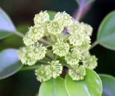 Wheel Tree_ FLOWER