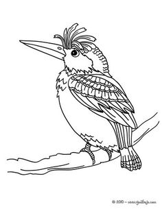 Woodpecker Coloring Page. Beautiful Woodpecker Coloring Page For Kids Of  All Ages.