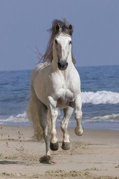 Andalusian                                                       …