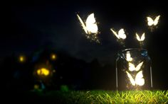 Download wallpaper night, grass, bank, moths, fireflies, 3d, anime resolution 1680x1050
