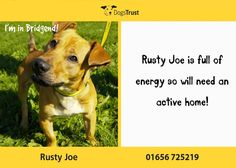 Rusty-Joe is a 9 month old crossbreed from Dogs Trust Bridgend. He is a little character. He is a little sensitive at times, but if handled gently but positively he comes around quickly. He is full of energy and loads of fun, but can get over the top. He did mix with other dogs previously, but is struggling in the kennel environment.
