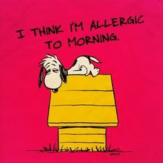 Monday morning with Snoopy.