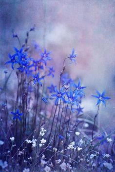 Bluebells - planted on graves to bring peace and blessings, and may also be used to decorate the altar at the funeral, or on Samhain