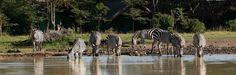 Sweetwaters Tented Camp In Ol Pejeta Conservancy, Kenya