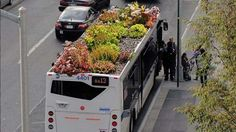 NYU graduate student Marco Castro Cosio has hit upon the idea of planting gardens on some previously wasted space found on city streets – the roofs of buses.