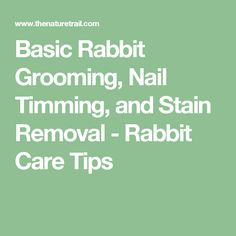 Basic Rabbit Grooming, Nail Timming, and Stain Removal - Rabbit Care Tips