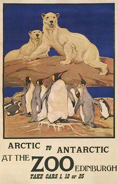 Arctic to Antarctic at the Edinburgh Zoo
