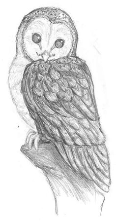 Hermine pegasusqueen barn owl pencil by the-snow-fox on DeviantArt animals animal drawings barn DeviantArt Hermine Owl pegasusqueen Pencil thesnowfox Art Drawings Sketches Simple, Animal Sketches, Bird Drawings, Pencil Art Drawings, Cute Drawings, Bird Pencil Drawing, Sketches Of Birds, Pencil Sketch Art, Cute Owl Drawing