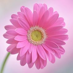 咲くやこの花館行って写真も撮ってきたんですけどね  ガーさんが 店にあったので 撮って見たら なかなか 連投するかもです m(_ _)m  I was featured my photos by these splendid accounts  @igclub_butterfly  Thank you so much  by j_flowersandincects