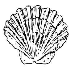 Top 25 Free Printable Shell Coloring Pages Online Sea Shell Clip Art Clip Art Scallop Shells
