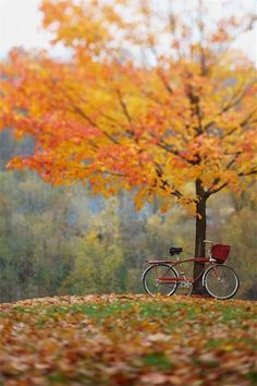 A ride to the park on a crisp fall day? That sounds perfect to me! Appreciate the beauty surrounding you this fall.