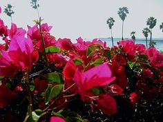A Fragrant Glance Of San Clemente Pier