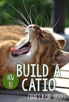 We can all agree that our pet cats are safest when kept strictly indoors, but wouldn't you love to let your kitty enjoy the fresh air of the outdoors, while still being protected from predators? Catios - or, cat patios - are the latest craze among cat parents. And, it turns out, you can create a catio for your feline friend that fits your living situation - and your budget! Follow along as eBay shares a simple guide to building a safe space for your cat to play!
