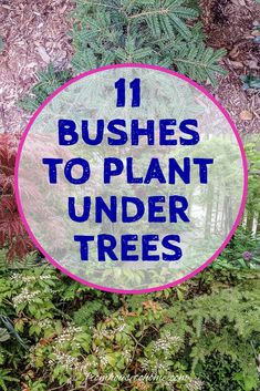 Find out which bushes to plant under trees in the shade garden in your backyard or front yard. These shrubs will help to brighten up your yard. #fromhousetohome #bushes #shade #gardeningtips #gardening #gardenideas Shade Loving Shrubs, Shade Shrubs, Shade Garden Plants, Sun Loving Plants, Shade Perennials, Shade Trees, Garden Trees, Garden Bed, Garden Shrubs