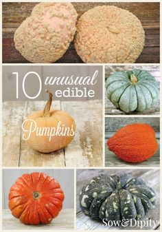 10 Unusual Edible Pumpkins you can grow yourself!! Plant them in spring, eat/decorate them in the fall.