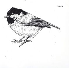 black and white drawings of birds - Pesquisa do Google