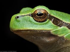 The Frog Princess.