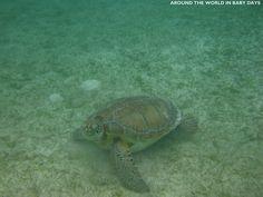 Marine Sea Turtle Riviera maya