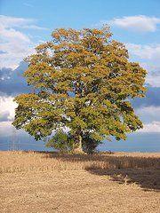 Lisa Young - Tree of Life