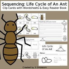 Sequencing: Life Cycle of an Ant Insect Activities, Spring Activities, Hands On Activities, Preschool Activities, Sensory Bins, Sensory Play, Insect Crafts, Easy Reader, Hands On Learning