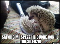 16 Reasons Hedgehogs Are Better Than Politicians - Funny Animal Quotes - - Amazing Creatures: 30 Funny animal captions part 8 pics) The post 16 Reasons Hedgehogs Are Better Than Politicians appeared first on Gag Dad. Animal Captions, Funny Animal Jokes, Cute Funny Animals, Funny Cute, Super Funny, Funny Animals With Captions, Animal Funnies, That's Hilarious, Funny Sexy