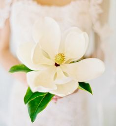 The Magnolia flower is a very hearty blossom. Originating from Asia before bees, this flower has over 200 species and has been known to survive the ice age, mountain foundation, and the continental drift. Magnolias signify dignity, love of nature and nobilty.  I like the single bloom for bridesmaids