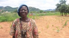 15 Years After Robert Mugabe Took Land From Whites And Gave It To New Black #Zimbabwe Farmers, The Country Can No Longer Feed Itself.