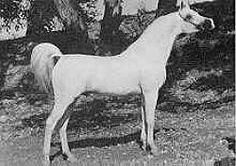 Aramus, my mare's grandsire