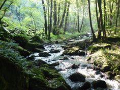Les gorges de la Canche (Saône-et-Loire, France)  Dans le Morvan en Bourgogne