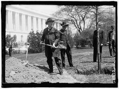 BACON, AUGUSTUS OCTAVIUS. SENATOR FROM GEORGIA, 1895-1914. LEFT, PLANTING TREE AT CAPITOL