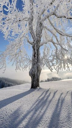 GET MORE SUN * Take advantage of your lunch break * Load up on sun during the we… – Winterbilder Winter Szenen, Winter Love, Winter Magic, Winter Christmas, Winter Pictures, Nature Pictures, Beautiful Pictures, Winter Photography, Landscape Photography